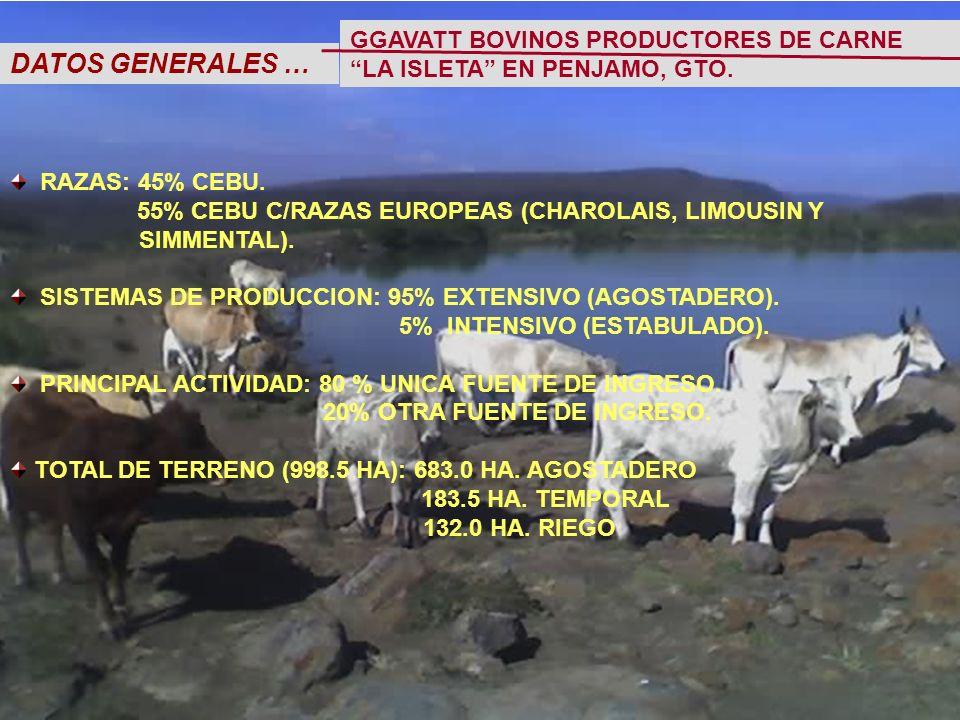 DATOS GENERALES … RAZAS: 45% CEBU. 55% CEBU C/RAZAS EUROPEAS (CHAROLAIS, LIMOUSIN Y SIMMENTAL).