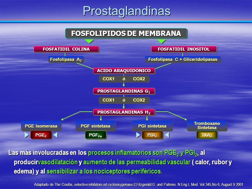 PGE Isomerasa PGF sintetasa PGI sintetasa Tromboxano Sintetasa Prostaglandinas Las más involucradas en los procesos inflamatorios son PGE 2 y PGI 2, a