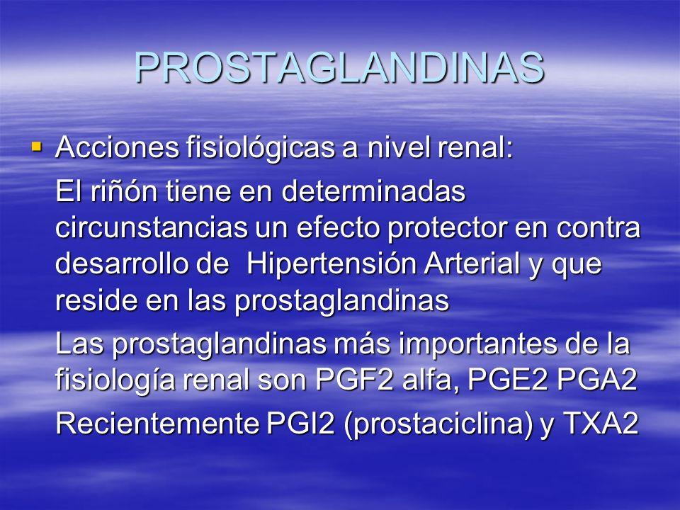 PROSTAGLANDINAS Acciones fisiológicas a nivel renal: Acciones fisiológicas a nivel renal: El riñón tiene en determinadas circunstancias un efecto prot