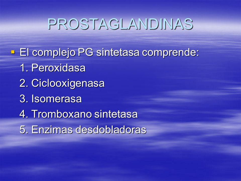 PROSTAGLANDINAS El complejo PG sintetasa comprende: El complejo PG sintetasa comprende: 1. Peroxidasa 2. Ciclooxigenasa 3. Isomerasa 4. Tromboxano sin