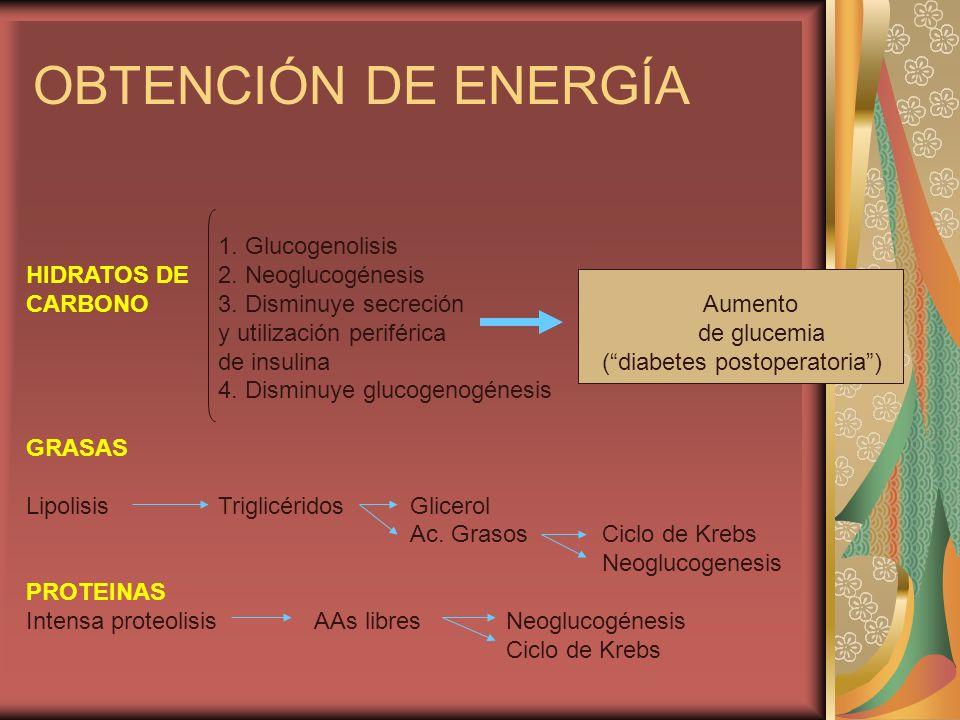 OBTENCIÓN DE ENERGÍA 1. Glucogenolisis HIDRATOS DE2. Neoglucogénesis CARBONO3. Disminuye secreción Aumento y utilización periféricade glucemia de insu