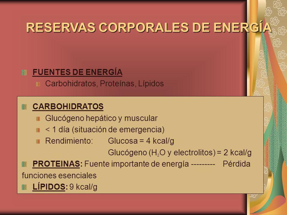 RESERVAS CORPORALES DE ENERGÍA FUENTES DE ENERGÍA Carbohidratos, Proteínas, Lípidos CARBOHIDRATOS Glucógeno hepático y muscular < 1 día (situación de