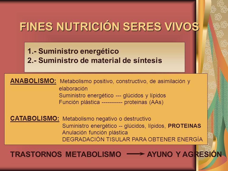 FINES NUTRICIÓN SERES VIVOS 1.- Suministro energético 2.- Suministro de material de síntesis ANABOLISMO: Metabolismo positivo, constructivo, de asimil