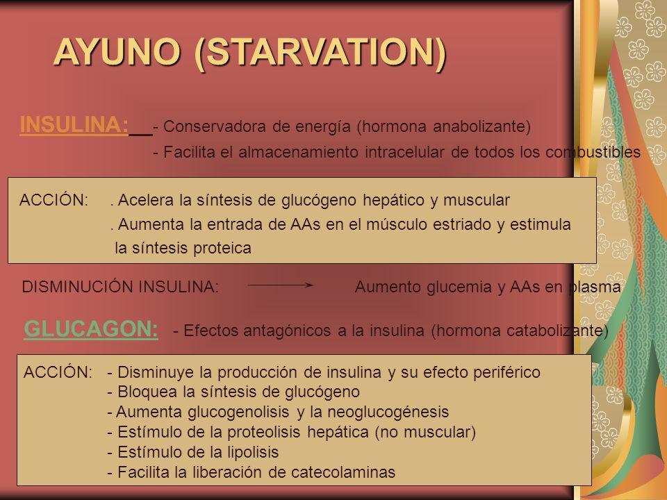 AYUNO (STARVATION) INSULINA: - Conservadora de energía (hormona anabolizante) - Facilita el almacenamiento intracelular de todos los combustibles ACCI