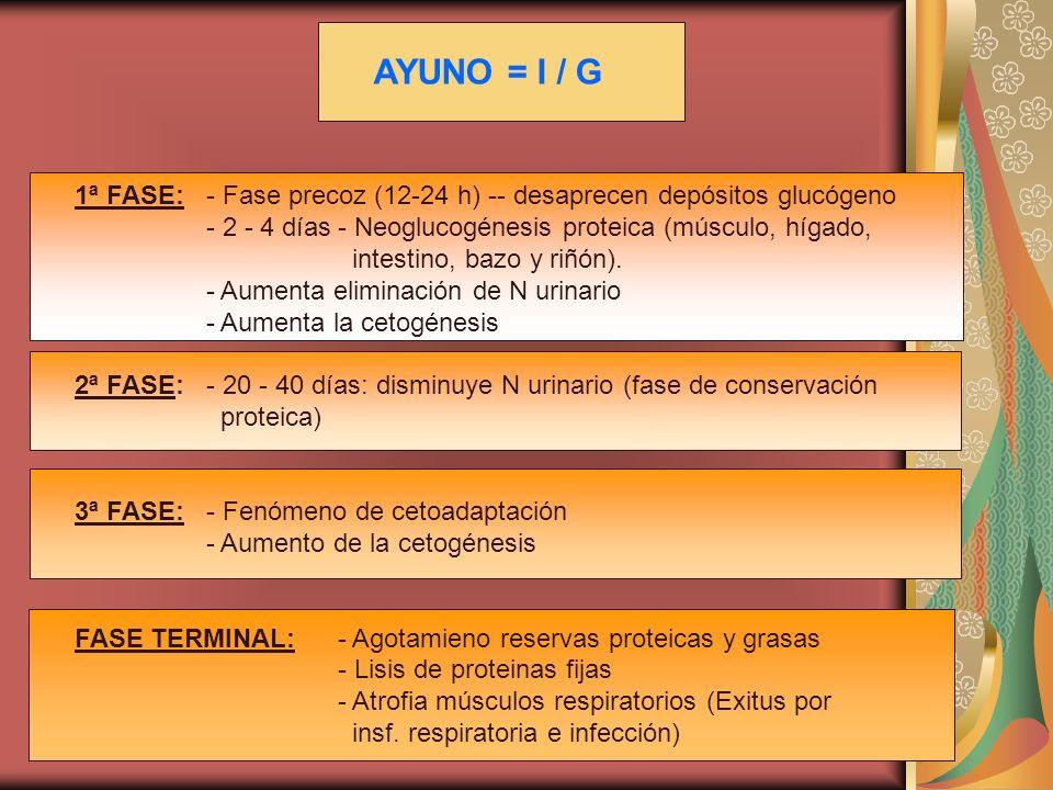 1ª FASE:- Fase precoz (12-24 h) -- desaprecen depósitos glucógeno - 2 - 4 días- Neoglucogénesis proteica (músculo, hígado, intestino, bazo y riñón). -