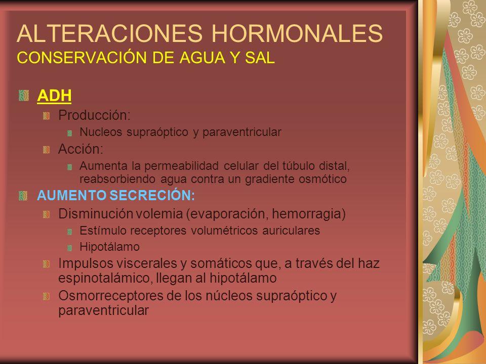 ALTERACIONES HORMONALES CONSERVACIÓN DE AGUA Y SAL ADH Producción: Nucleos supraóptico y paraventricular Acción: Aumenta la permeabilidad celular del