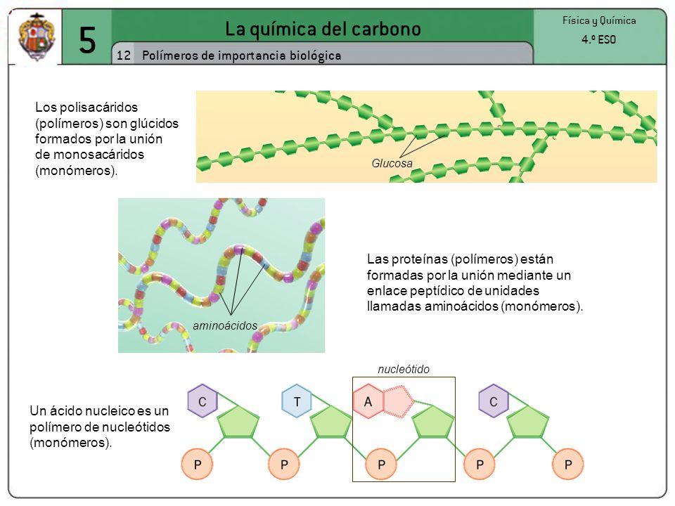 5 La química del carbono 12 Física y Química 4.º ESO Polímeros de importancia biológica Los polisacáridos (polímeros) son glúcidos formados por la uni