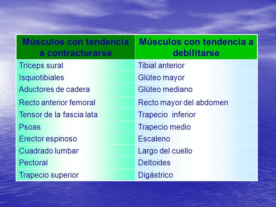 Músculos con tendencia a contracturarse Músculos con tendencia a debilitarse Tríceps suralTibial anterior IsquiotibialesGlúteo mayor Aductores de cade
