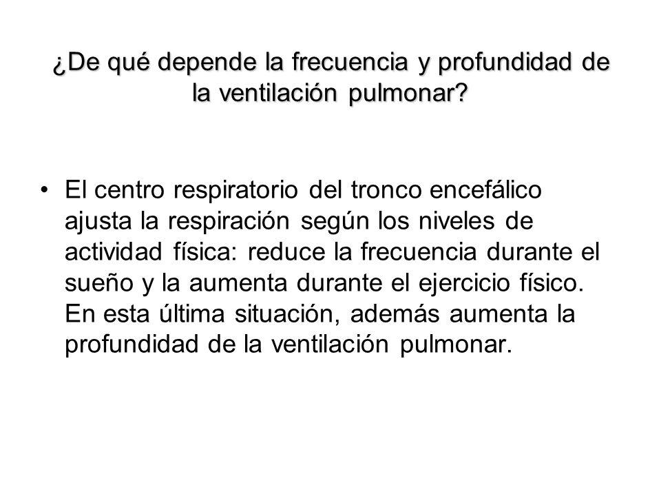 ¿De qué depende la frecuencia y profundidad de la ventilación pulmonar? El centro respiratorio del tronco encefálico ajusta la respiración según los n
