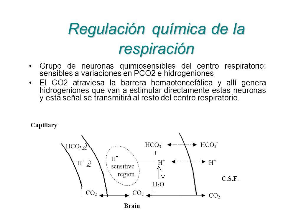 Regulación química de la respiración Grupo de neuronas quimiosensibles del centro respiratorio: sensibles a variaciones en PCO2 e hidrogeniones El CO2