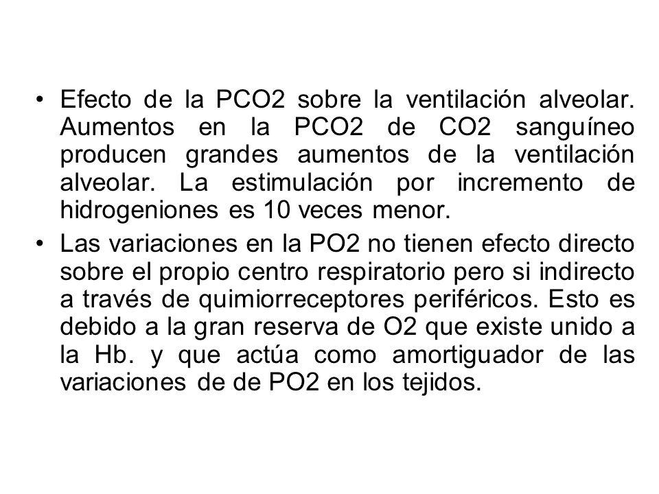 Efecto de la PCO2 sobre la ventilación alveolar. Aumentos en la PCO2 de CO2 sanguíneo producen grandes aumentos de la ventilación alveolar. La estimul
