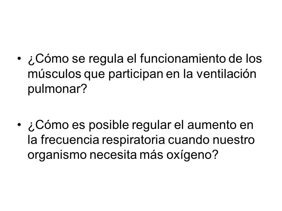 ¿Cómo se regula el funcionamiento de los músculos que participan en la ventilación pulmonar? ¿Cómo es posible regular el aumento en la frecuencia resp