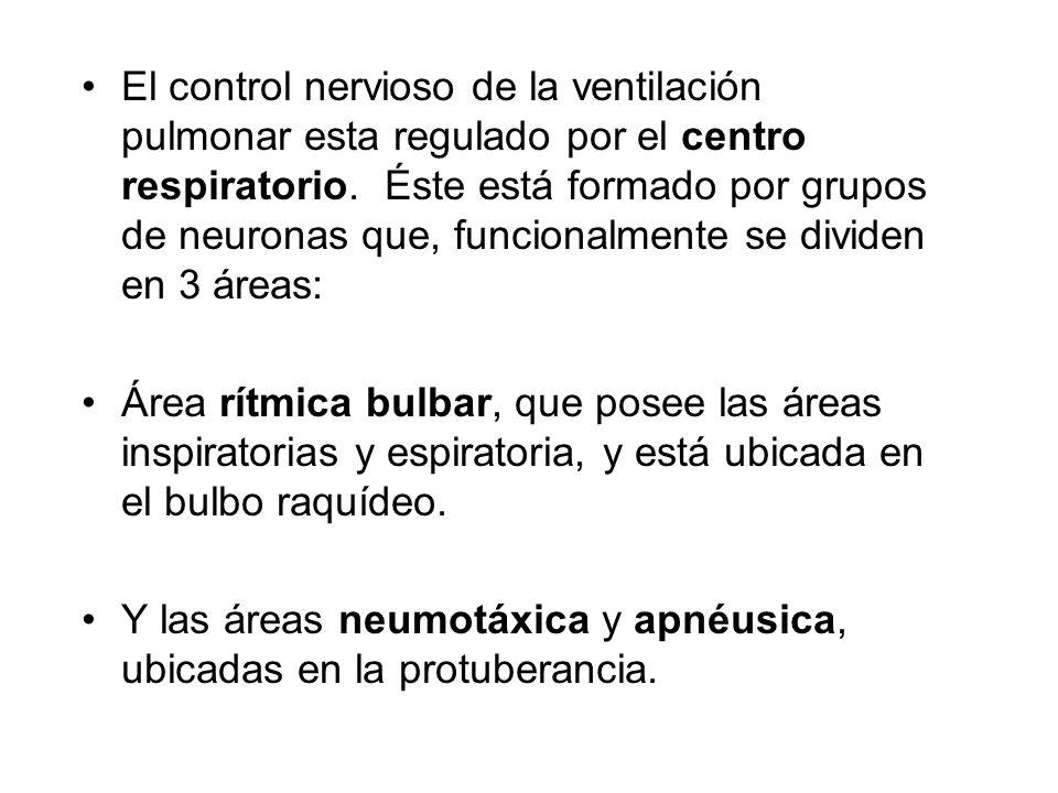 El control nervioso de la ventilación pulmonar esta regulado por el centro respiratorio. Éste está formado por grupos de neuronas que, funcionalmente