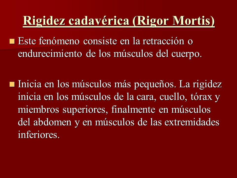 Rigidez cadavérica (Rigor Mortis) Este fenómeno consiste en la retracción o endurecimiento de los músculos del cuerpo. Este fenómeno consiste en la re