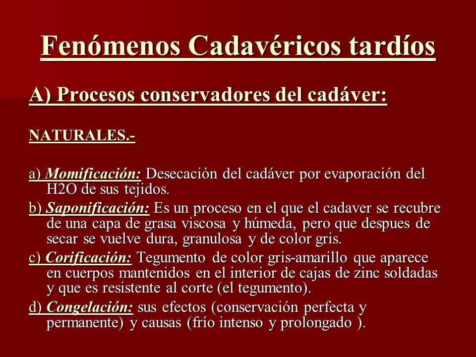 Fenómenos Cadavéricos tardíos A) Procesos conservadores del cadáver: NATURALES.- a) Momificación: Desecación del cadáver por evaporación del H2O de su