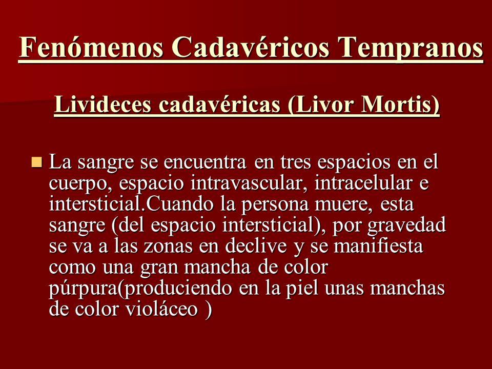 Fenómenos Cadavéricos Tempranos Livideces cadavéricas (Livor Mortis) La sangre se encuentra en tres espacios en el cuerpo, espacio intravascular, intr