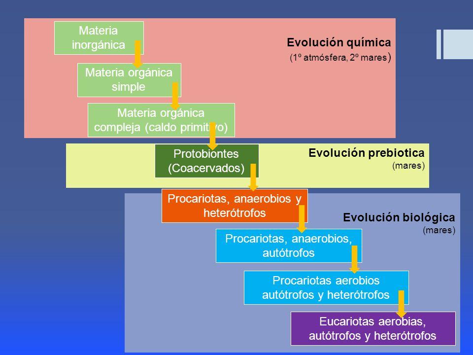 Evolucion Quimica y Biologica Evolución Biológica