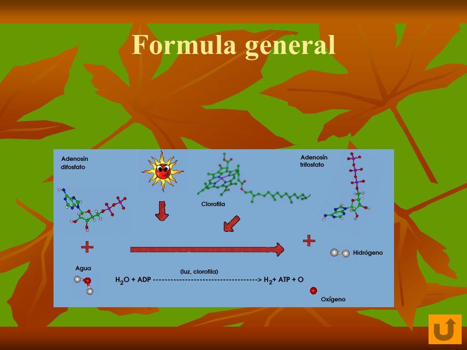 Pigmentos que intervienen en la Fotosíntesis Los organismos fotosintéticos (vegetales superiores, algas, cianobacterias, bacterias purpúreas y verdes del azufre) tienen distintos tipos de pigmentos con los que absorben la luz: 1.