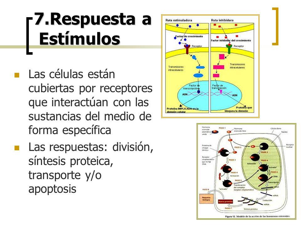 7.Respuesta a Estímulos Las células están cubiertas por receptores que interactúan con las sustancias del medio de forma específica Las respuestas: di