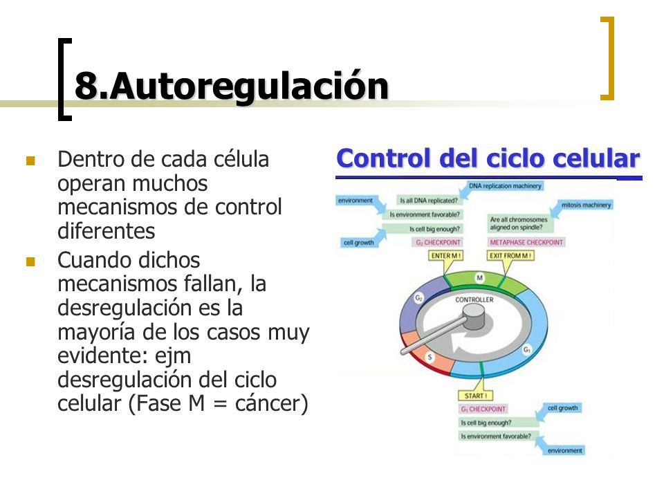 8.Autoregulación Dentro de cada célula operan muchos mecanismos de control diferentes Cuando dichos mecanismos fallan, la desregulación es la mayoría