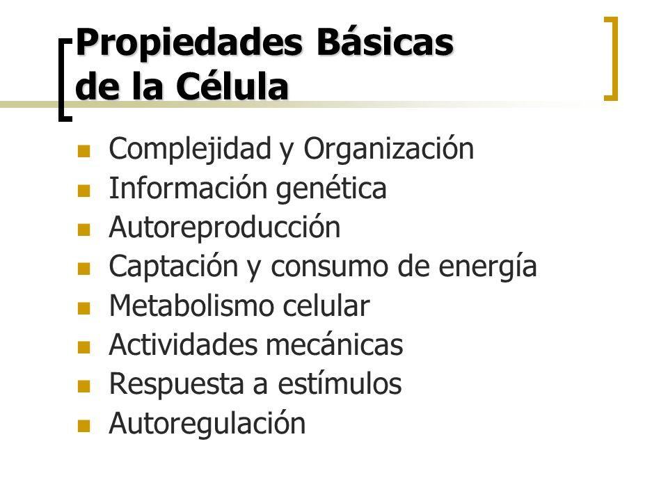 Propiedades Básicas de la Célula Complejidad y Organización Información genética Autoreproducción Captación y consumo de energía Metabolismo celular A