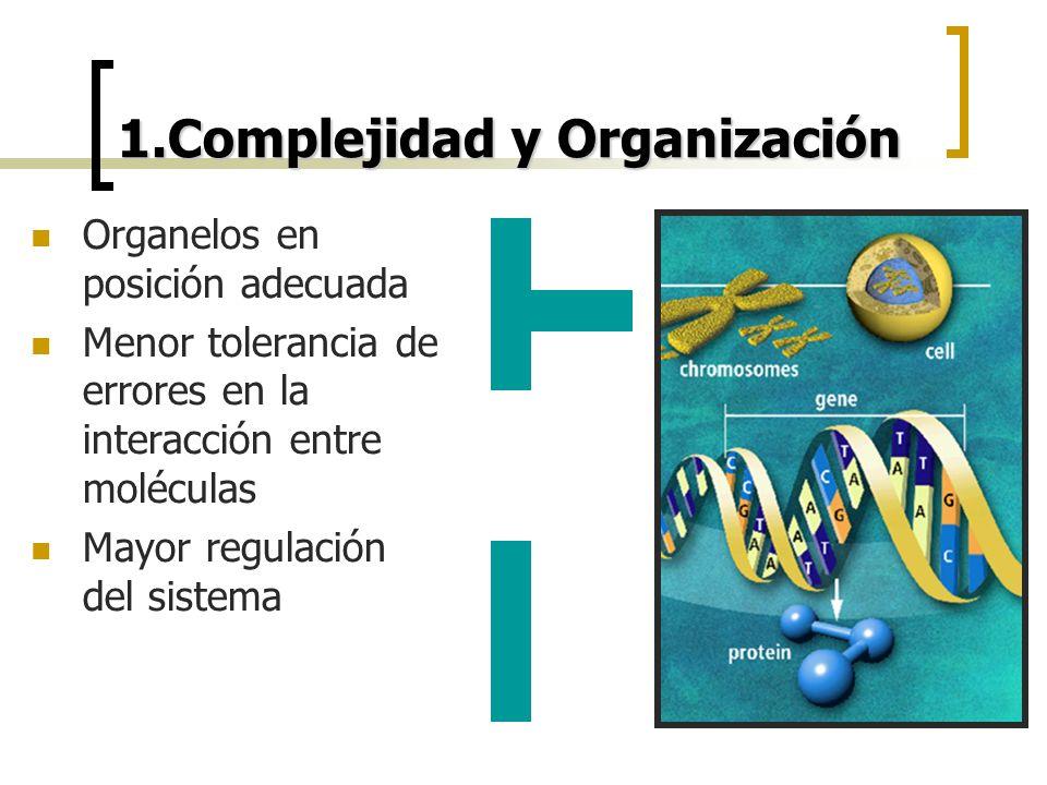 1.Complejidad y Organización Organelos en posición adecuada Menor tolerancia de errores en la interacción entre moléculas Mayor regulación del sistema