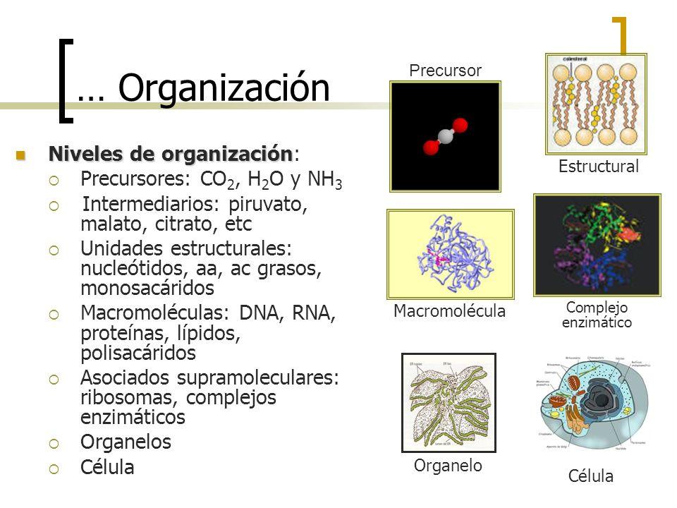… Organización Niveles de organización Niveles de organización: Precursores: CO 2, H 2 O y NH 3 Intermediarios: piruvato, malato, citrato, etc Unidade