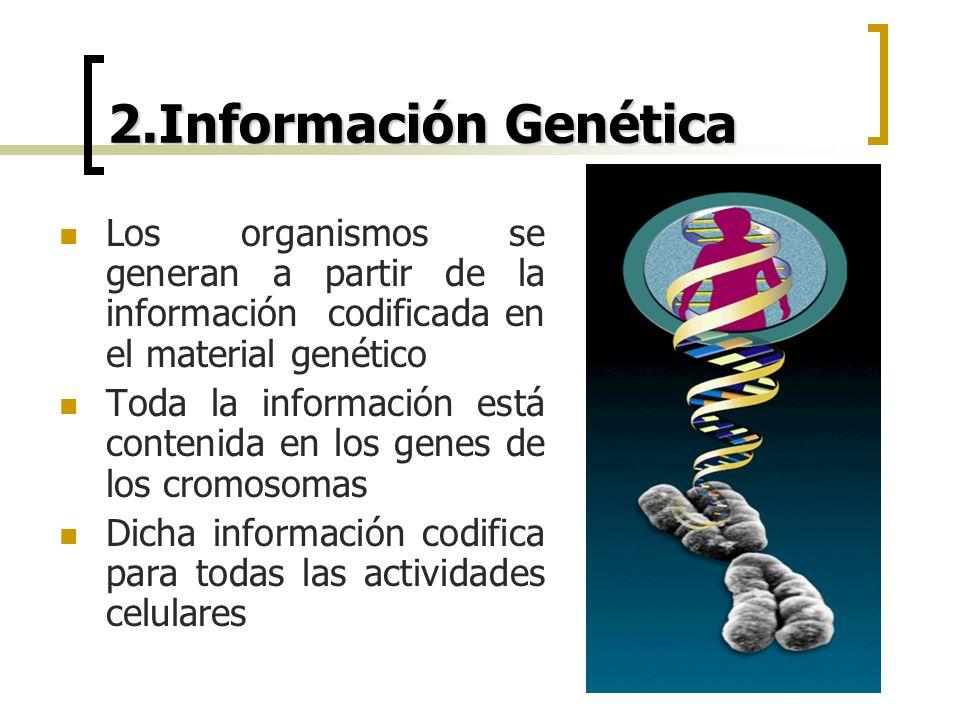 2.Información Genética Los organismos se generan a partir de la información codificada en el material genético Toda la información está contenida en l