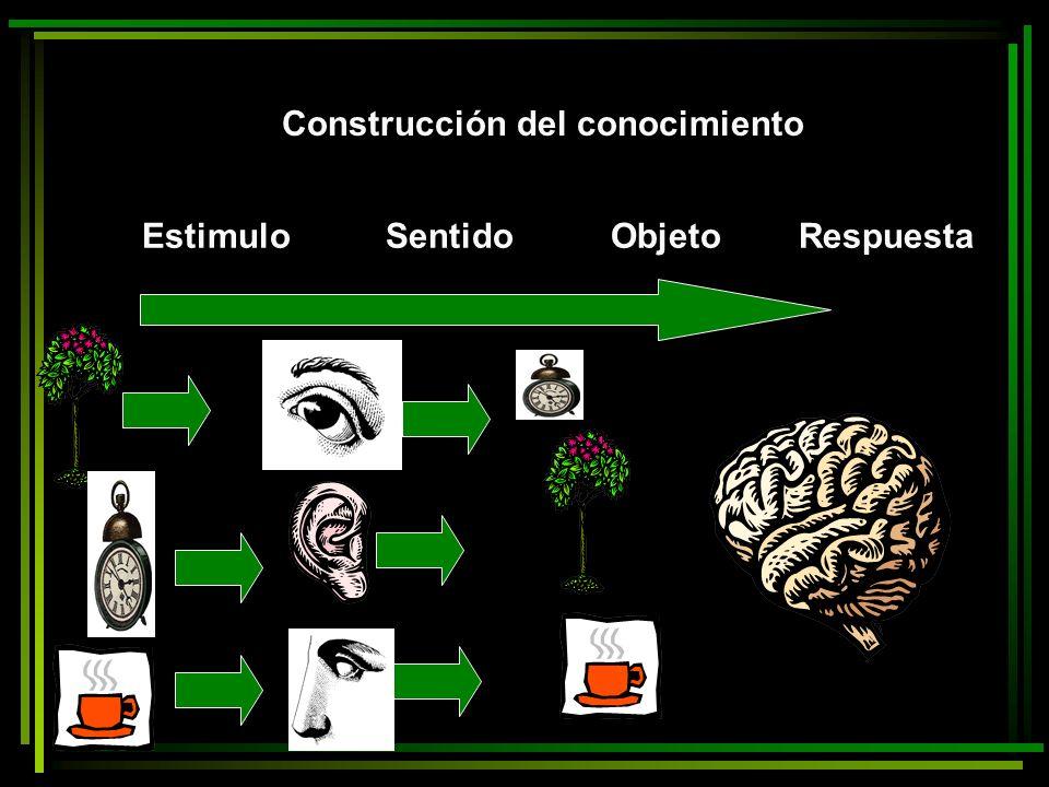 NEUROCIENCIA CONOCIMIETO BIDIRECCIONAL sensación Percepción conceptualización Impulsos Perceptos preconceptos