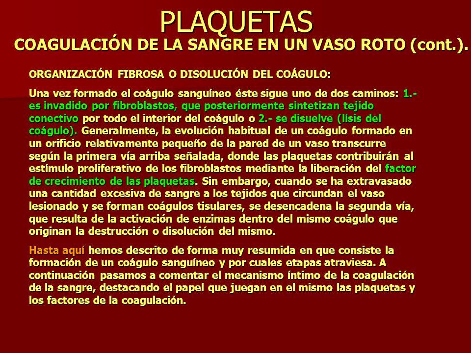 PLAQUETAS COAGULACIÓN DE LA SANGRE EN UN VASO ROTO (cont.). ORGANIZACIÓN FIBROSA O DISOLUCIÓN DEL COÁGULO: Una vez formado el coágulo sanguíneo éste s