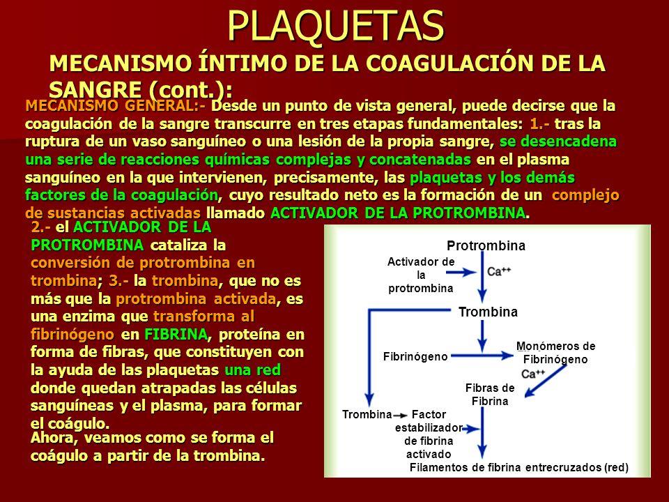 PLAQUETAS MECANISMO ÍNTIMO DE LA COAGULACIÓN DE LA SANGRE (cont.): MECANISMO GENERAL:- Desde un punto de vista general, puede decirse que la coagulaci