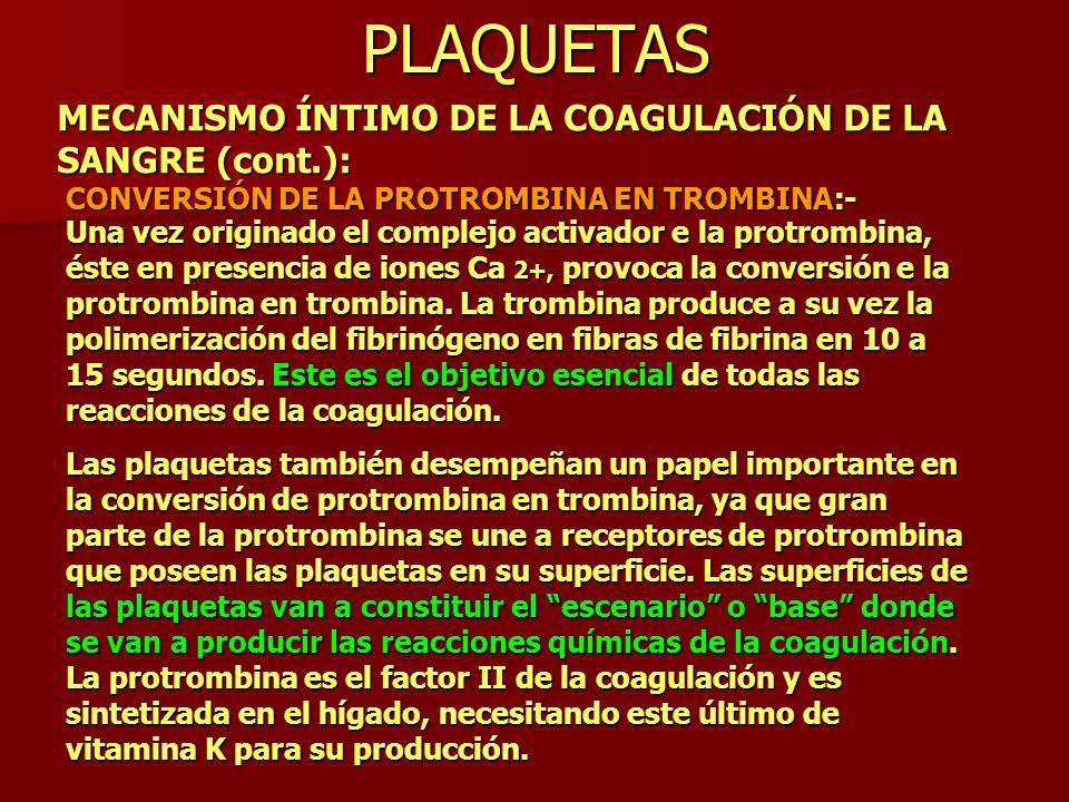 PLAQUETAS MECANISMO ÍNTIMO DE LA COAGULACIÓN DE LA SANGRE (cont.): CONVERSIÓN DE LA PROTROMBINA EN TROMBINA:- Una vez originado el complejo activador
