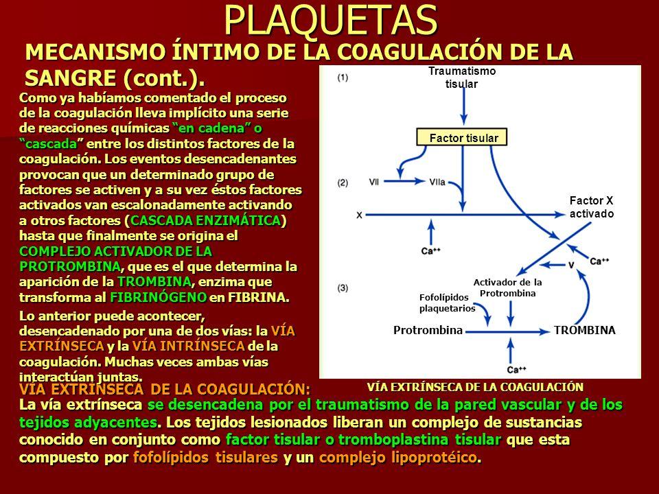 PLAQUETAS MECANISMO ÍNTIMO DE LA COAGULACIÓN DE LA SANGRE (cont.). VÍA EXTRÍNSECA DE LA COAGULACIÓN Como ya habíamos comentado el proceso de la coagul