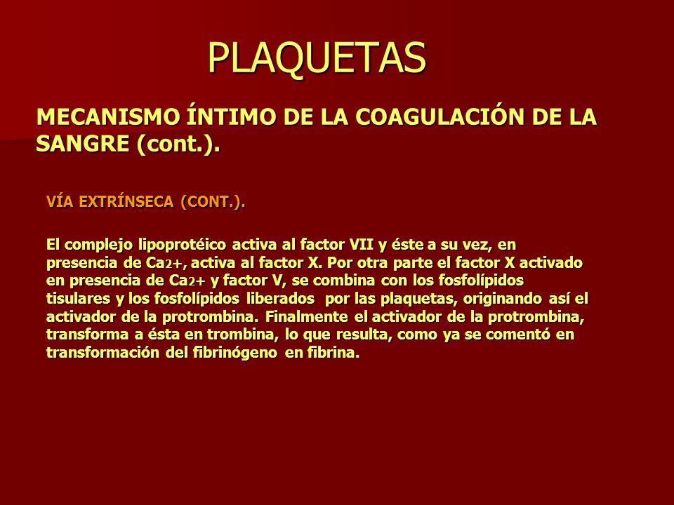 PLAQUETAS MECANISMO ÍNTIMO DE LA COAGULACIÓN DE LA SANGRE (cont.). VÍA EXTRÍNSECA (CONT.). El complejo lipoprotéico activa al factor VII y éste a su v
