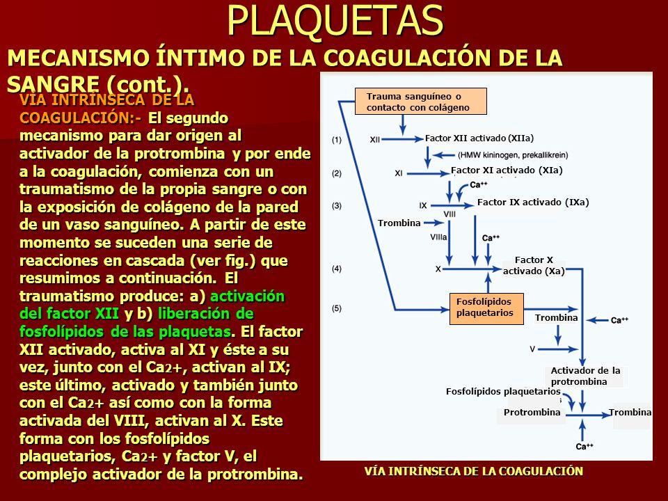 PLAQUETAS MECANISMO ÍNTIMO DE LA COAGULACIÓN DE LA SANGRE (cont.). VÍA INTRÍNSECA DE LA COAGULACIÓN VÍA INTRÍNSECA DE LA COAGULACIÓN:- El segundo meca