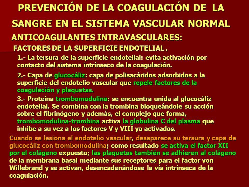 PREVENCIÓN DE LA COAGULACIÓN DE LA SANGRE EN EL SISTEMA VASCULAR NORMAL 1.- La tersura de la superficie endotelial: evita activación por contacto del