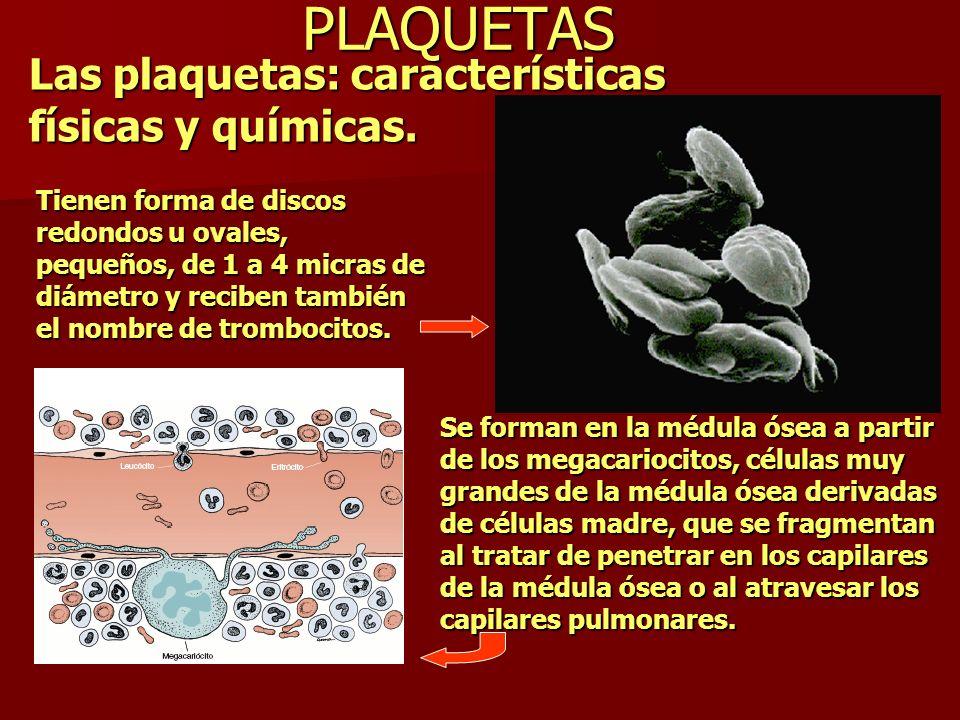 PLAQUETAS Las plaquetas: características físicas y químicas. Tienen forma de discos redondos u ovales, pequeños, de 1 a 4 micras de diámetro y reciben