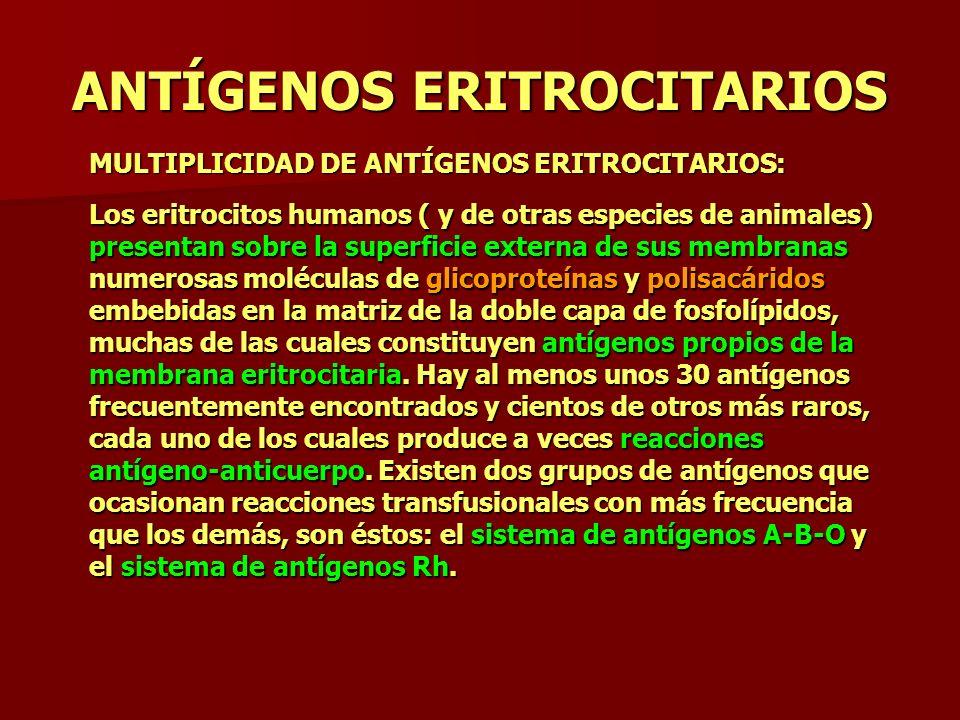 ANTÍGENOS ERITROCITARIOS MULTIPLICIDAD DE ANTÍGENOS ERITROCITARIOS: Los eritrocitos humanos ( y de otras especies de animales) presentan sobre la supe