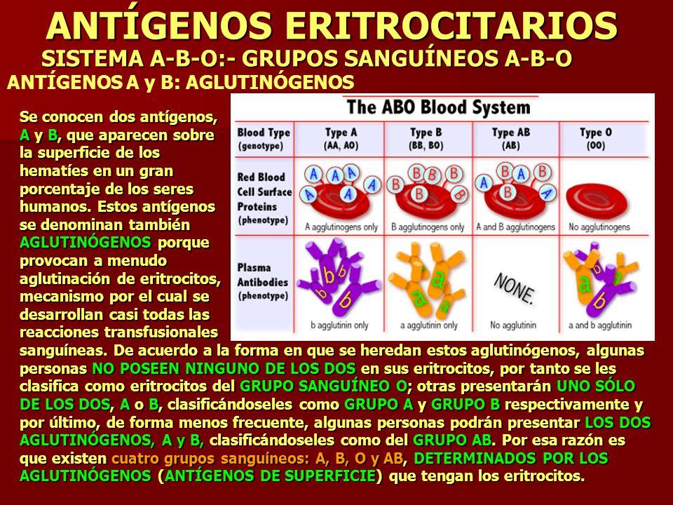 ANTÍGENOS ERITROCITARIOS SISTEMA A-B-O:- GRUPOS SANGUÍNEOS A-B-O ANTÍGENOS A y B: AGLUTINÓGENOS Se conocen dos antígenos, A y B, que aparecen sobre la