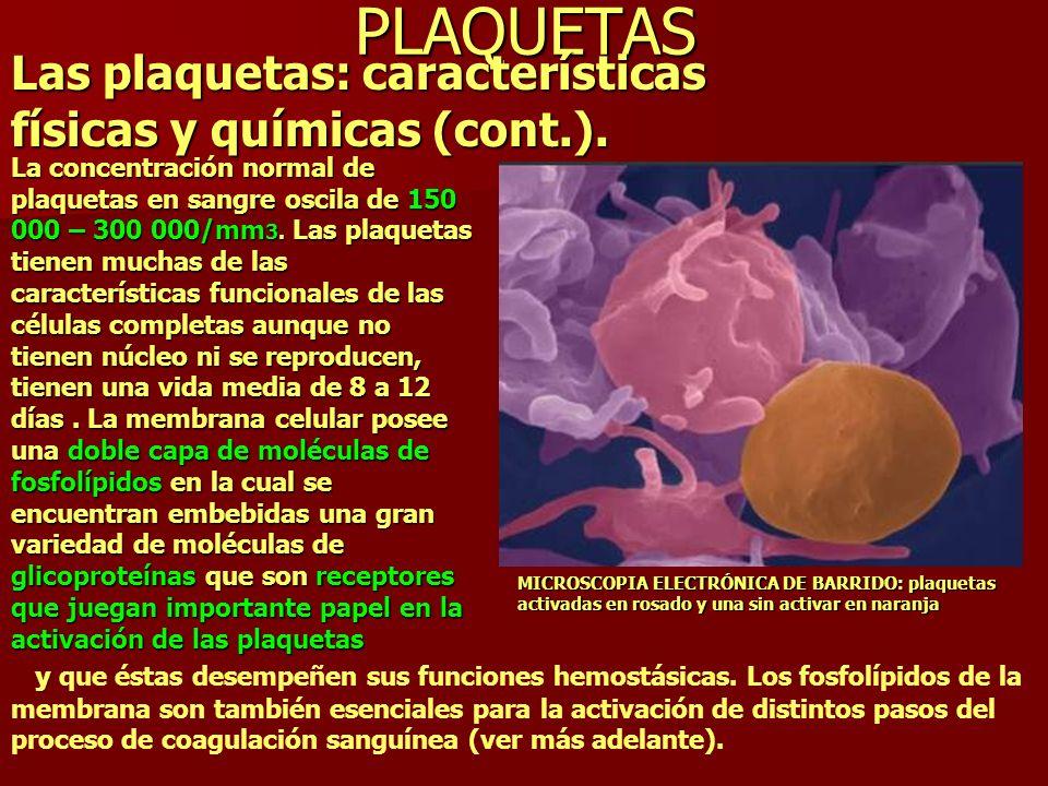 PLAQUETAS Las plaquetas: características físicas y químicas (cont.). La concentración normal de plaquetas en sangre oscila de 150 000 – 300 000/mm 3.