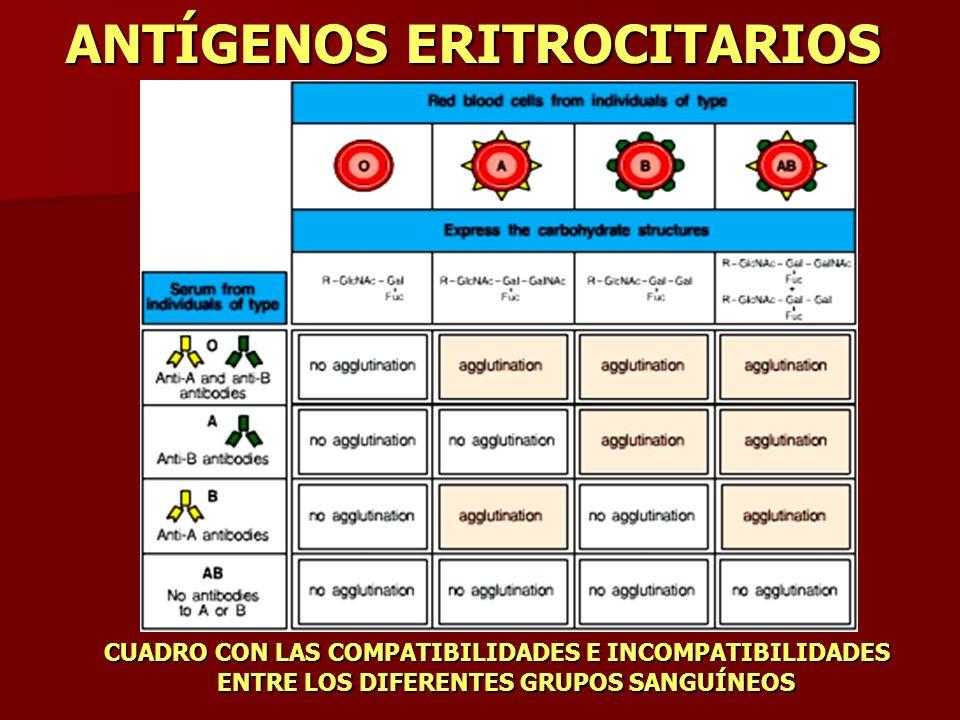 ANTÍGENOS ERITROCITARIOS CUADRO CON LAS COMPATIBILIDADES E INCOMPATIBILIDADES ENTRE LOS DIFERENTES GRUPOS SANGUÍNEOS