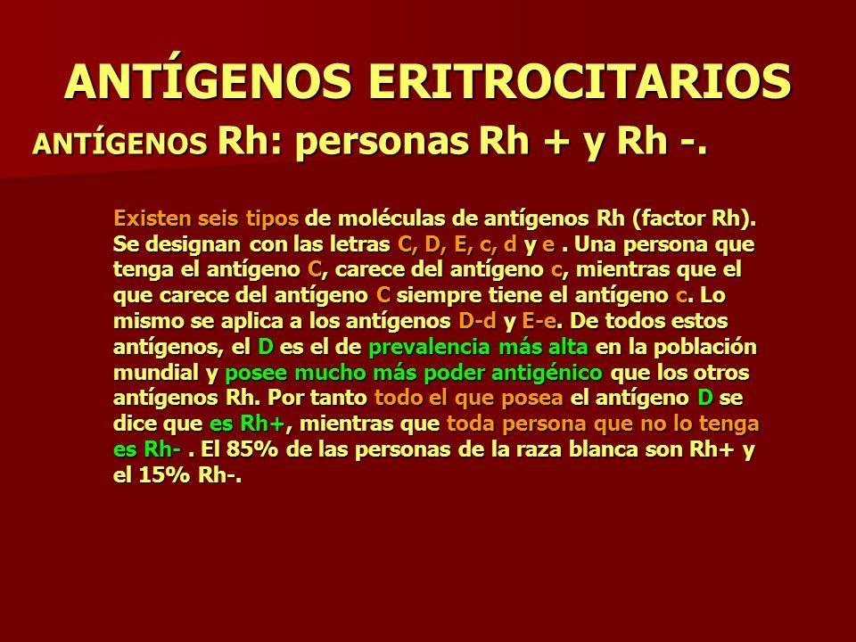 ANTÍGENOS ERITROCITARIOS ANTÍGENOS Rh: personas Rh + y Rh -. Existen seis tipos de moléculas de antígenos Rh (factor Rh). Se designan con las letras C