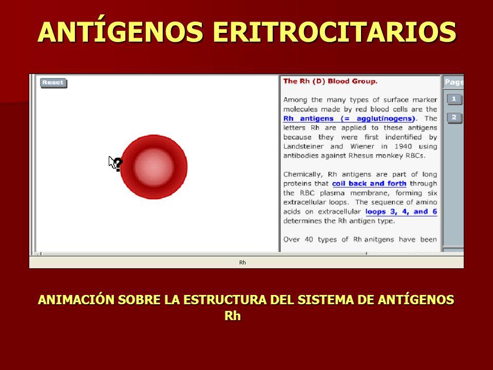 ANTÍGENOS ERITROCITARIOS ANIMACIÓN SOBRE LA ESTRUCTURA DEL SISTEMA DE ANTÍGENOS Rh