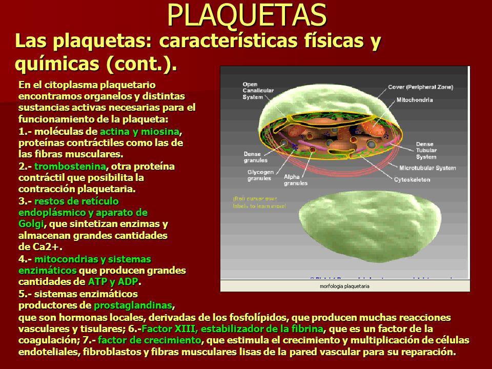 PLAQUETAS Las plaquetas: características físicas y químicas (cont.). En el citoplasma plaquetario encontramos organelos y distintas sustancias activas