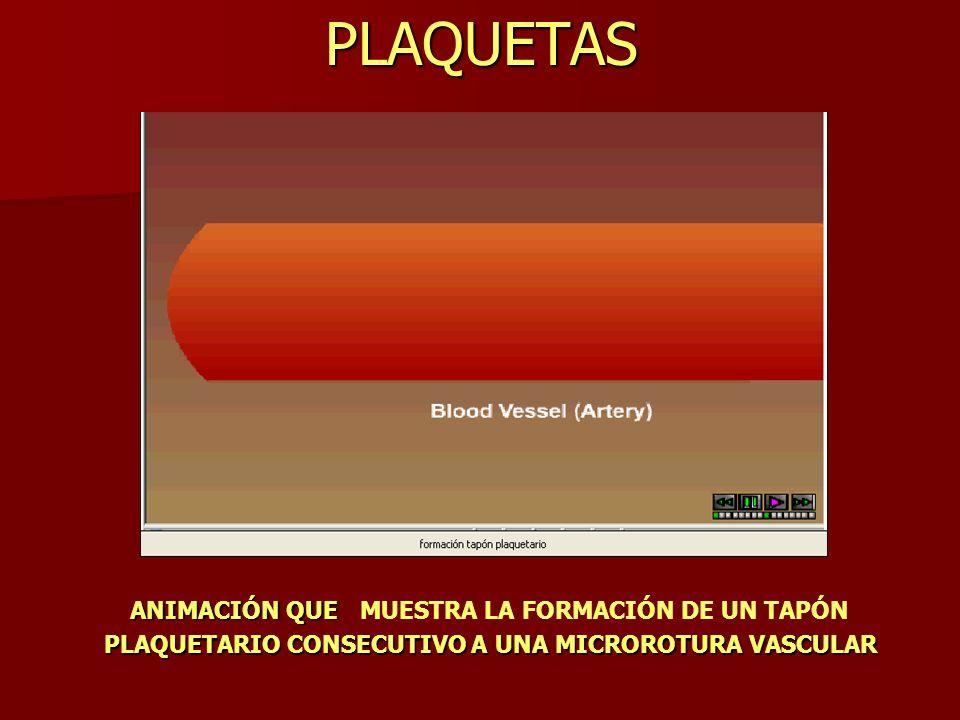 PLAQUETAS En la animación de la izquierda se observan algunos de los cambios físicos que se producen en una plaqueta una vez que se adhiere a la pared vascular.