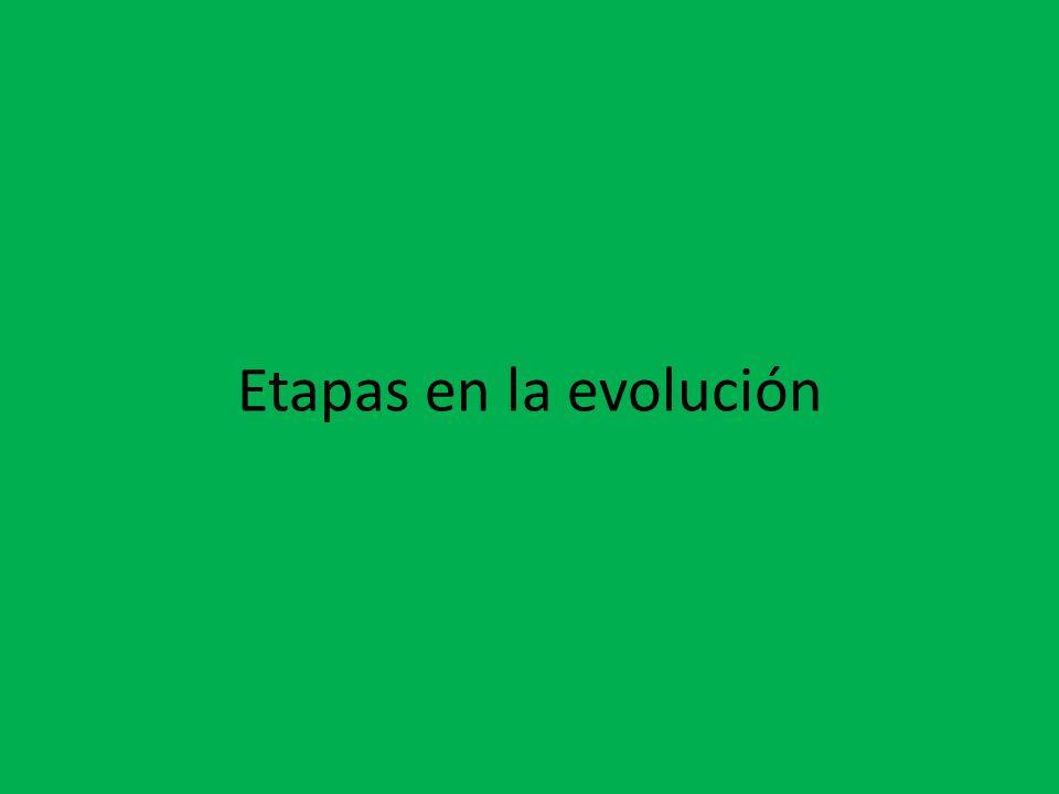 Etapas en la evolución