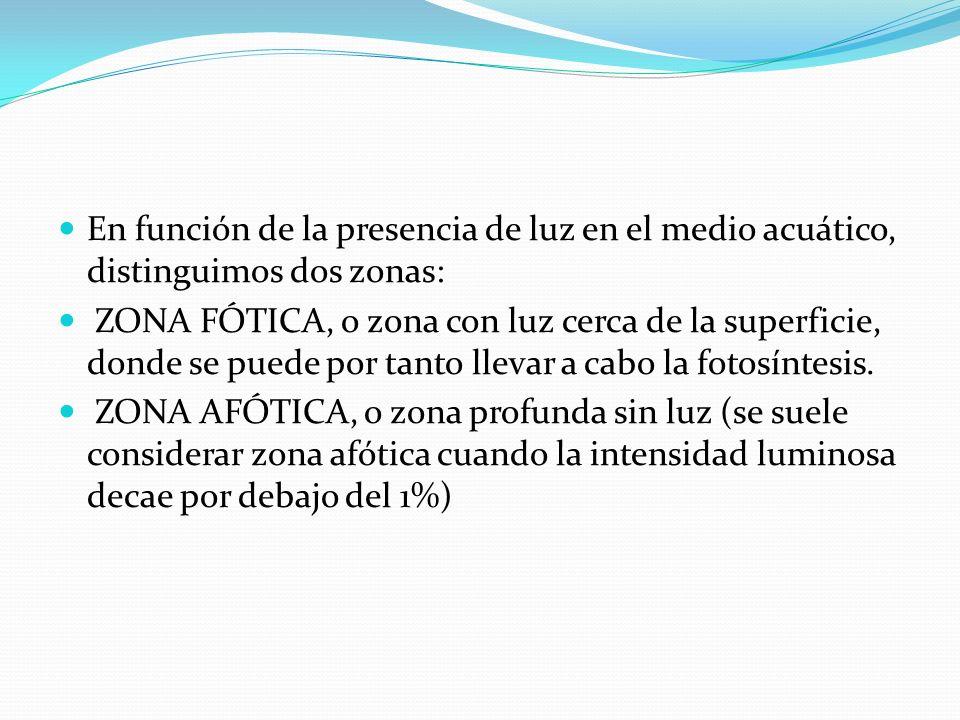 En función de la presencia de luz en el medio acuático, distinguimos dos zonas: ZONA FÓTICA, o zona con luz cerca de la superficie, donde se puede por