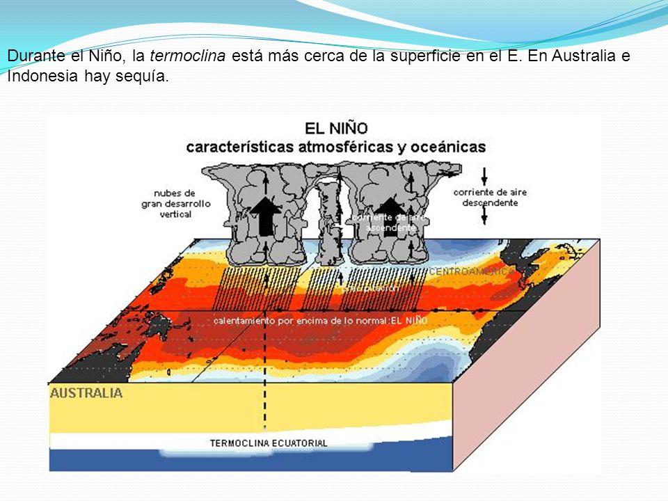 Durante el Niño, la termoclina está más cerca de la superficie en el E. En Australia e Indonesia hay sequía.