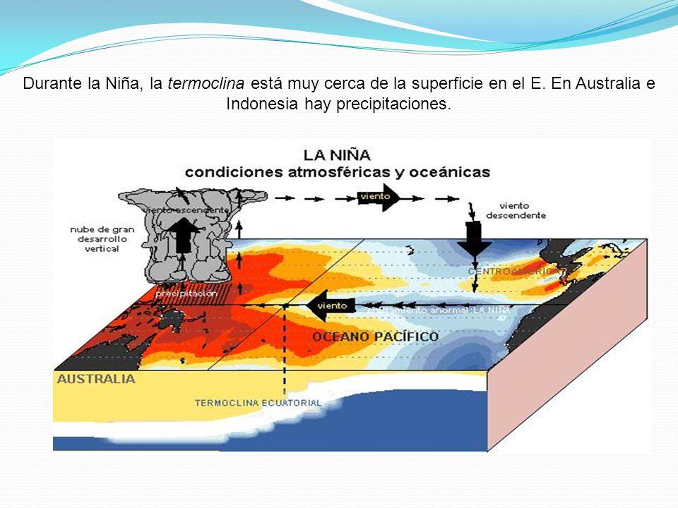 Durante la Niña, la termoclina está muy cerca de la superficie en el E. En Australia e Indonesia hay precipitaciones.