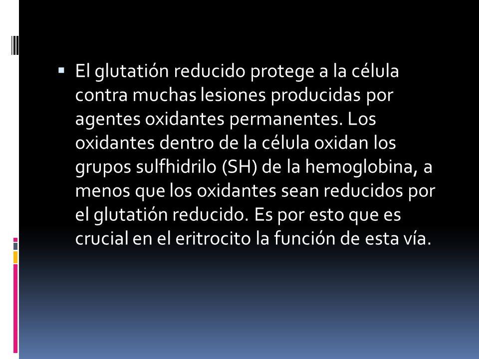 El glutatión reducido protege a la célula contra muchas lesiones producidas por agentes oxidantes permanentes. Los oxidantes dentro de la célula oxida